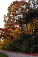 autumn in high park