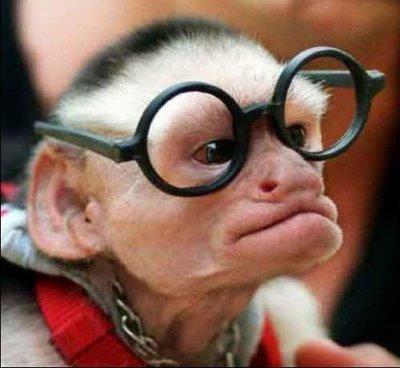 krazy monkey: