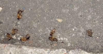 dead wasps