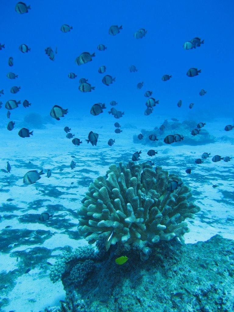obyan beach underwater