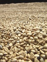 Photo by Deirdre: coffee harvest, coffee parchment, sundried, Australia, NSW