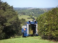 Photo by Deirdre: coffee harvester