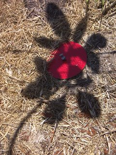 Photo by Deirdre: shadows falling across a round red reflector thing, looking like a flower