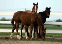 3 Yearlings
