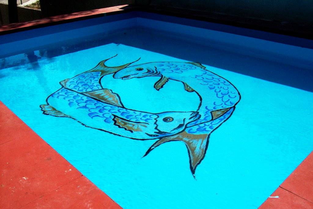 Cat logo de cuadros e rubio for Piscina de peces