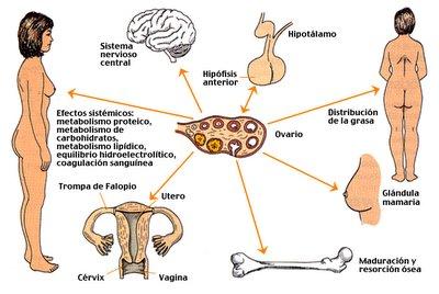 La deducción la lombriz del organismo