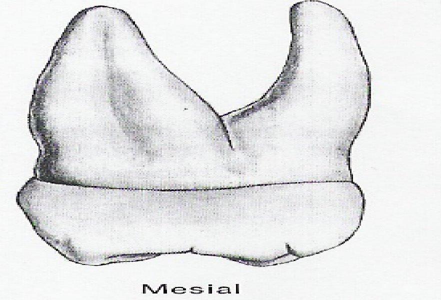 laboratoristas dentales