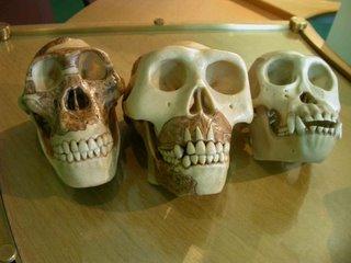 click to enlarge 'skulls' by Gary Chiang
