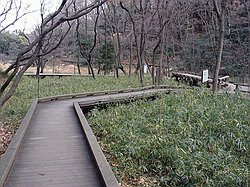 Wooden Walkways in Ikuta Ryokuchi Park - Jan 9th 2005
