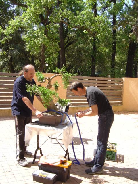 Jean-françois busquet, des arbres et des hommes