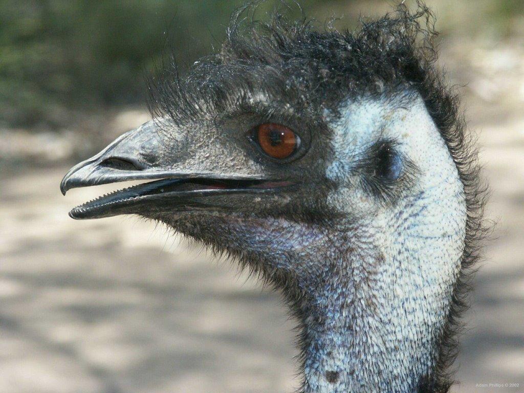 emu killer - photo #13