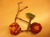 inde en stop Eduardo Marinho Sylvain Andre hitchhiking bike velo flower fleur flor