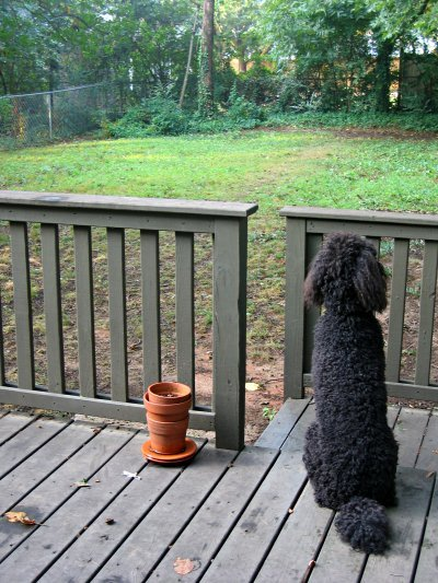 Spenser, sitting on the deck