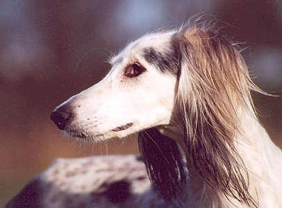 waarom gapen honden
