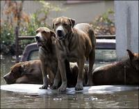 Stranded Dogs Awaiting Rescue in New Orleans