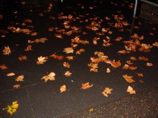 leafs on wet ground