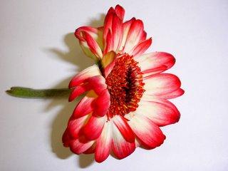 Jing's Flower