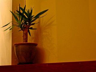 Cornered Plant