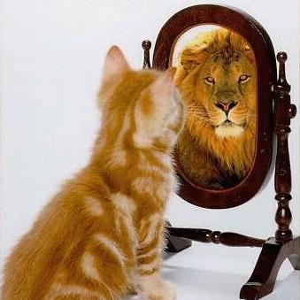 Resultado de imagen de espejo engaña