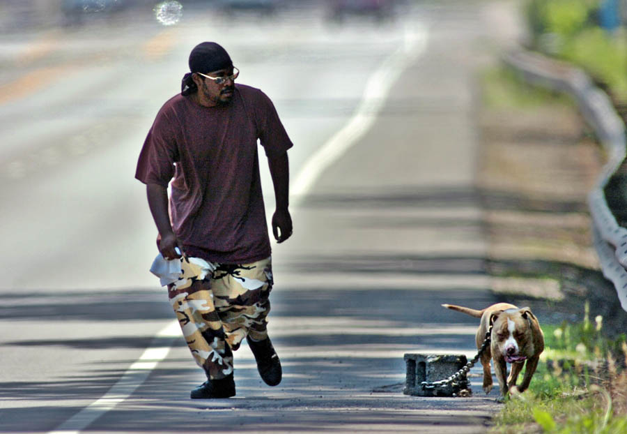pitbulls aggressiveness nature or nurture Aggressive dogs: nature or nurture by aidan bindoff on 03/01/2008 aggression is very complex and cannot be adequately handled through this medium (possibly australian cattle dog / pitbull based on appearance and smarts.