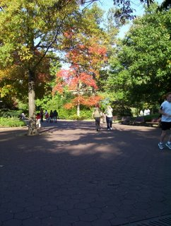 Picture of large asphalt walkway showing a vast space, with large scarlet maple turning into fiery red orange colors, surrounded by green trees. Two women can be seen walking down, and a jogger in a white shirt exits the picture on right