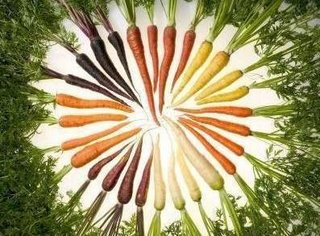 Photograph of carrots arranged in a circle by color. The carrots range from nearly black-purple, white, orange, yellow, red-orange, and eggplant purple in color. The Photograph is by Stephen Ausmus, on the web courtesy of USDA / Agricultural Research Service