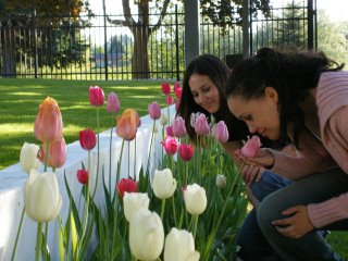 http://photos1.blogger.com/blogger/5591/1369/320/mindy_kara_tulips2.jpg
