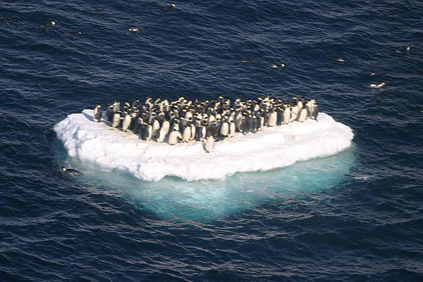 A Marcha dos Pinguins versus A Jangada de Pedra