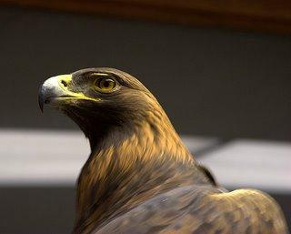 Golden Eagle via IRC
