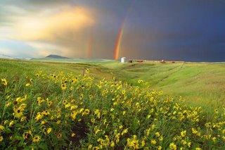 Prairie Rainbow