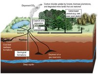 Carbon sequestration