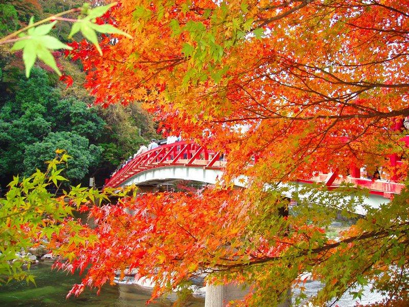 Autumn @ Kourankei Gorge, Japan