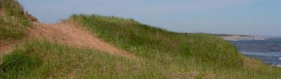 Walk the Dunelands or Homeland trail at Cavendish beach