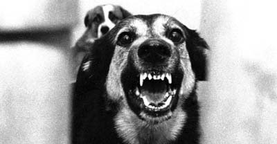 Pet Pictures: A Dog Barking