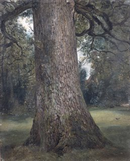 John Constable, Study of the Trunk of an Elm Tree, 1821