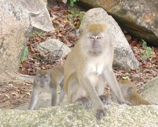 I am actually very scared of monkeys... mainly cause they're rabbies carrier and flea-infested creatures