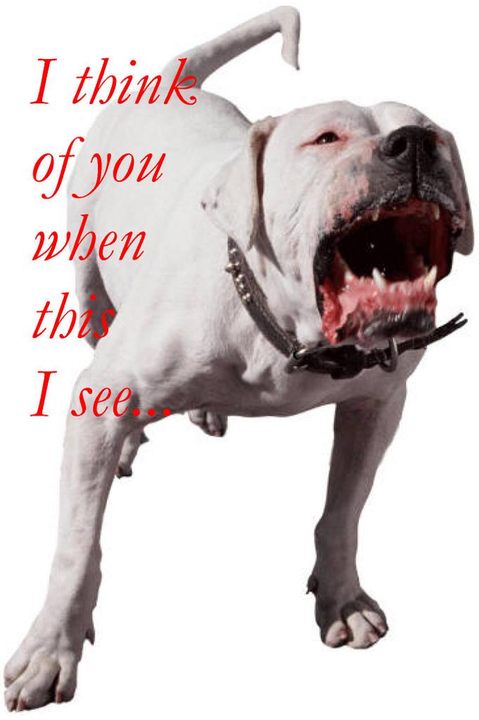Почему лают собаки на некоторых людей