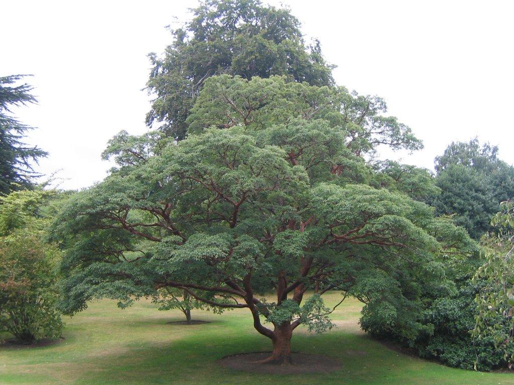 Chez luckie mardi le jardin botanique royal d 39 edinburgh for Boutique jardin botanique