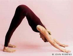 http://photos1.blogger.com/blogger/5727/1909/1600/Yoga%20Journal%20Down%20Dog