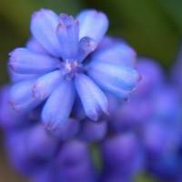 Ein Kegel aus kleinen Blüten, aufgenommen ganz in der Nähe und auf dem Rückweg vom Viaduc des Arts.