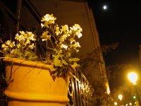 Ein paar Blumen auf einer Mauer irgendwo zwischen Métroende und zuhause.
