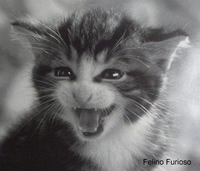 Felino Furioso en Internet