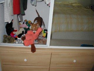 chihuahua toy closet