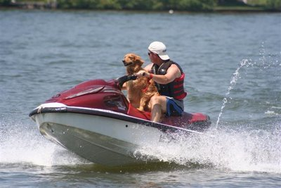 dog on jet-ski, Lake Gaston