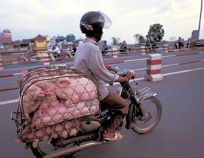 orient transport overloads