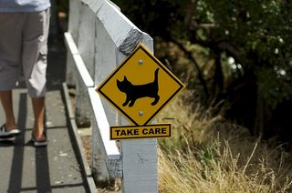 werd cat sign
