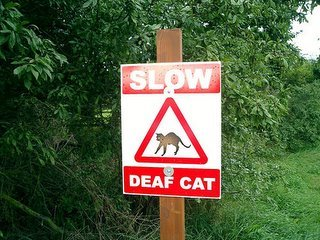 slow - deaf cat