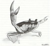 Prodigy Crab