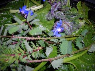misto di  erbe  con  borragine