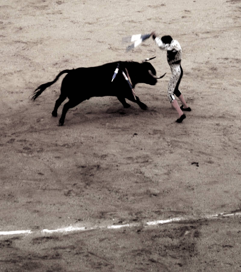 bullfight #2; click for previous post